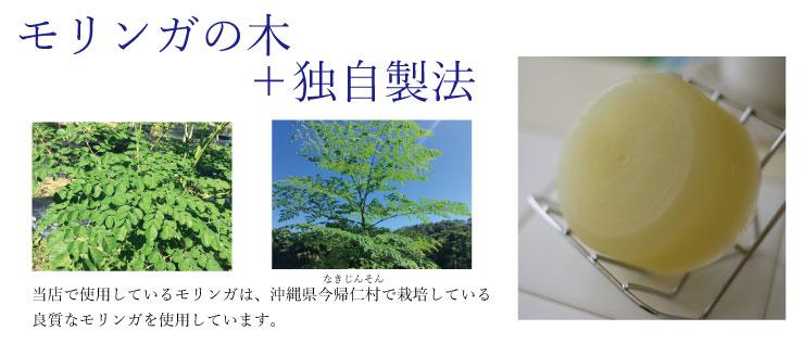 モリンガの木とは