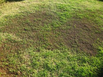 芝生に目土を入れる